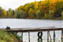 Chat gris sur l'au bord du lac en automne Photographie stock libre de droits