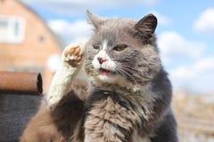 Chat gris sur la rue photos stock