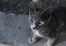 Chat gris sur la rue Photos stock