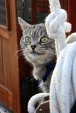 Chat gris sur le yacht Photographie stock