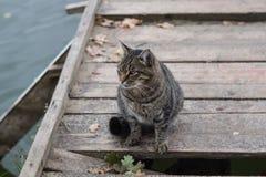 Chat gris sur un pilier en bois Images libres de droits