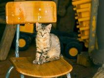 Chat gris sur une chaise à une ferme Image stock