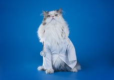 Dr. chat Photographie stock