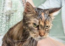 Chat humide dans le bain photographie stock