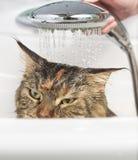 Chat humide dans le bain images stock