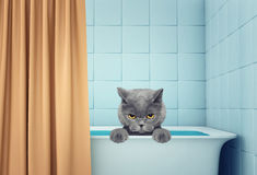 Chat humide mignon dans le bain photographie stock libre de droits