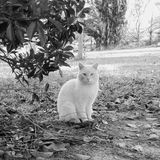 Chat intelligent photo libre de droits