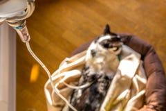 Chat intraveineux d'égouttement Image libre de droits