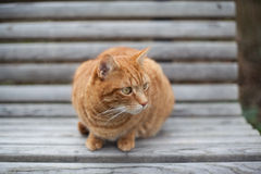 Chat jaune mignon sur la chaise Photos stock