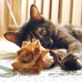Chat jouant avec la fleur Photographie stock
