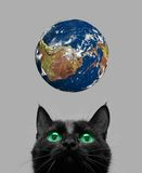 Chat jouant avec la terre Photographie stock