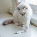 Chat jouant avec le tube Photo stock