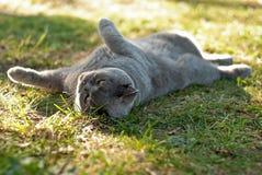 Chat jouant sur le sien de retour, se situant dans l'herbe Photographie stock libre de droits