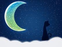 Chat la nuit de l'hiver Images libres de droits