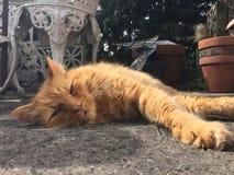 Chat le prenant un bain de soleil somnolent de gingembre sur le balcon en pierre Images stock