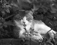 Chat Lounging Images libres de droits