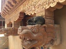 Chat lounging sur la statue de temple Image libre de droits