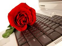 Chat Love. Red rose on laptop keyboard Stock Photography