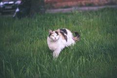 chat méfiant - effet de film de vintage Images stock