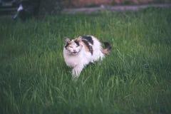 chat méfiant - effet de film de vintage Photos libres de droits