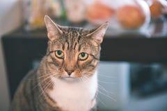 chat méfiant - effet de film de vintage Images libres de droits