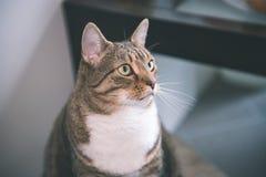 chat méfiant - effet de film de vintage Image stock