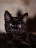 chat méfiant noir Image stock