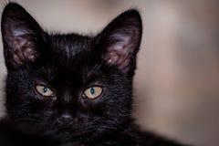chat méfiant noir Photographie stock