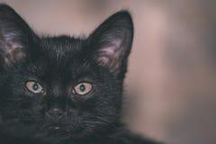 chat méfiant noir - regard de film de vintage Image libre de droits