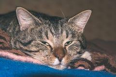 chat méfiant - regard de film de vintage Photographie stock libre de droits
