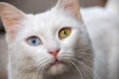 chat magique photo libre de droits