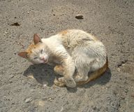 Chat malade Photographie stock libre de droits