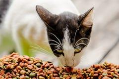 Chat mangeant de la nourriture de grain Images libres de droits