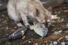 Chat mangeant des poissons Photos libres de droits