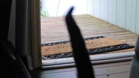 Chat marchant par la porte banque de vidéos