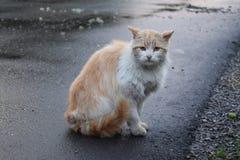 Chat marchant sur la rue Image stock