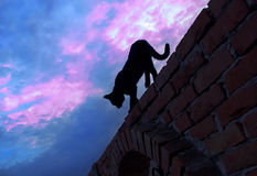 Chat marchant sur le mur de briques image libre de droits