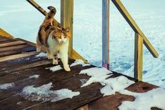 Chat marchant sur le porche photographie stock