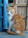 Chat marocain photos stock