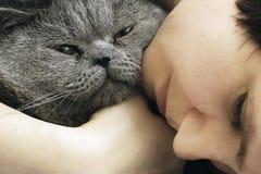 Chat masculin britannique de cheveux courts dans les bras de sa maîtresse photos stock