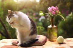 Chat masculin de Tom le beau avec le flox fleurit dans le vase sur le fond vert de jardin Image stock