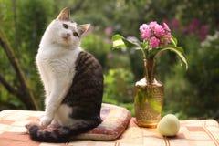Chat masculin de Tom le beau avec le flox fleurit dans le vase sur le fond vert de jardin Photo libre de droits