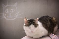 Chat masculin dormant sur le fond de mur de concret photos stock