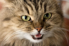 Chat mauvais Image stock