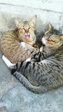 Chat mignon Photo stock