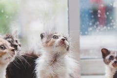 Chat mignon Photographie stock libre de droits