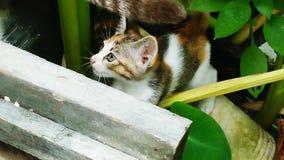 Chat mignon Photo libre de droits