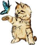 Chat mignon avec jouer doux de papillon images stock