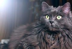 Chat mignon avec la lumière en fonction Photographie stock libre de droits