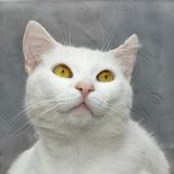 Chat mignon blanc Photographie stock